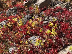 plants turning red and yellow at Trappers Lake